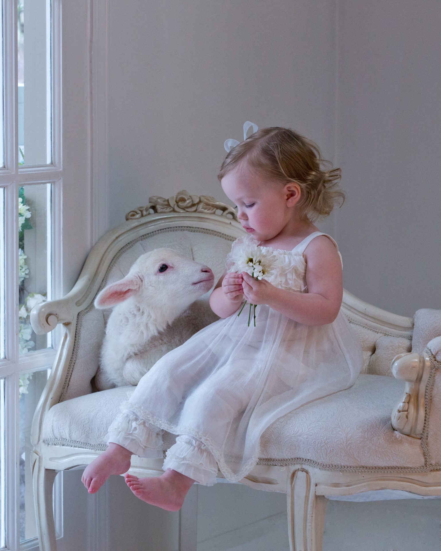 Little girl sitting in the window with a little white lamb